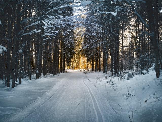 Se ressourcer dans une forêt enneigée